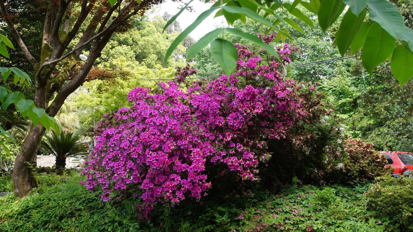 Ботанический сад – еще одно колоритное место в Батуми